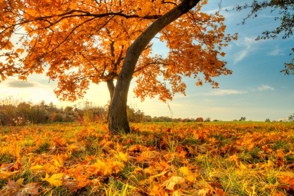 top fall destinations for travel therapy