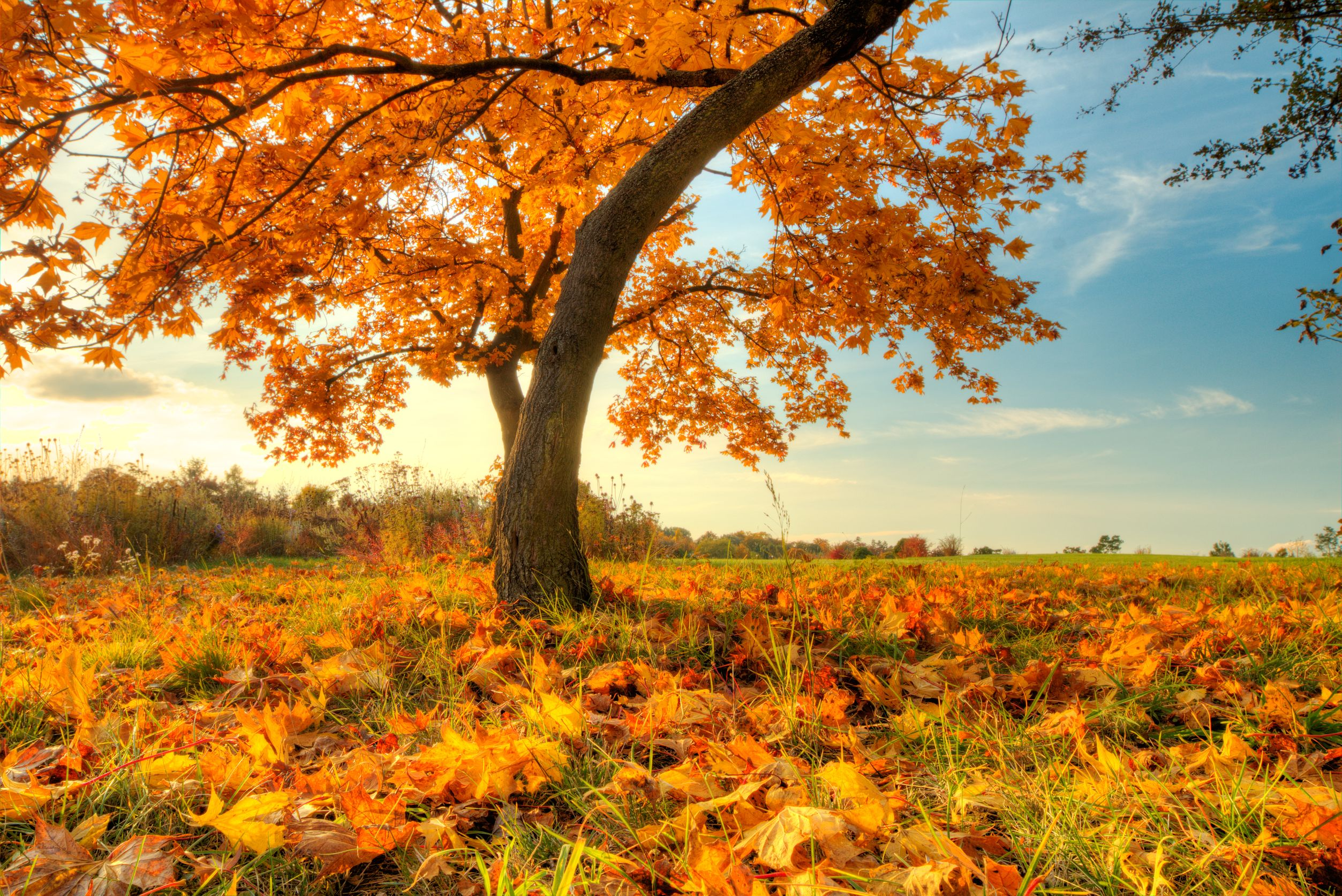 Autumn Attractions: Top Destinations for Fall
